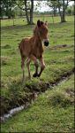 Pixie Foal Stock - 4 by ForgottenSky-Stock