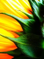 sunflower by resistancetoys