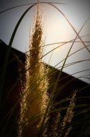 Shadowed Sunset Willow by Cherose77