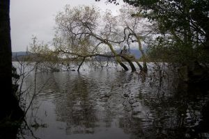 Flooded lake stock by A68Stock