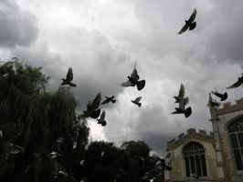 pidgeons and church by dark-dragon-stock