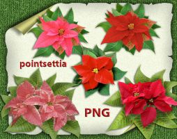 Pointsettia by roula33