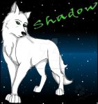 Shadow by Shadow-of-the-Wolf