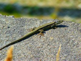Lizzard_stock by drowned-in-air-stock