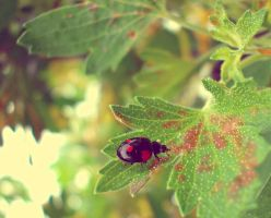 black ladybird by kingdaughter