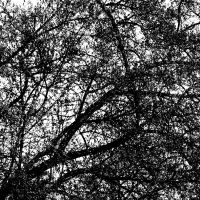 Abstract Tree by da-phil