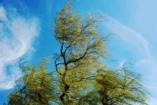 Windy Willow by EarthHart