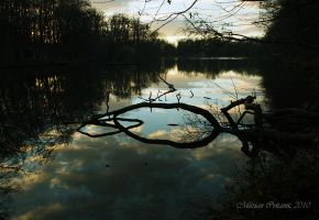 Maksimir Lake At Dawn by mcvitanic