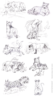Vesper Creature Contest Sketches 1 by MoonsongWolf