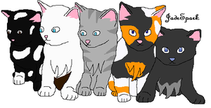 The kits of ShadowClan by invaderliz100