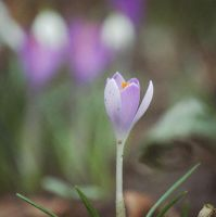 Here is the spring again. by satiricalme