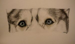 Mischa- Husky Eyes by xx-ashley