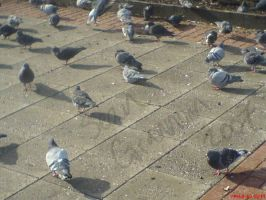 The Pigeon Army by The-Justified-Poet