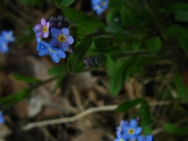 Forget me not 2 by DubriZona