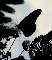 silhouetted beauty by Sasquatch1221