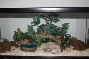 Wilma's Vivarium by icantthinkofaname-09