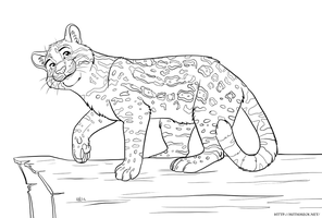 Ocelot Line Art by Greykitty