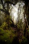 Mossy forest 6 by kristo1974