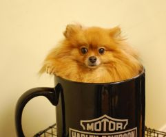 A Little Dog with my Coffee by Water-Ferret