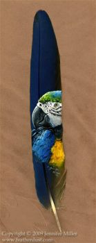 Blue and Gold Macaw Portrait by Nambroth