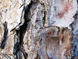 Bark Texture 3 by element321