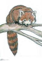 Red Panda-Sketch by rockpainter