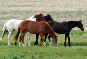 Feral Horses I by hunter1828