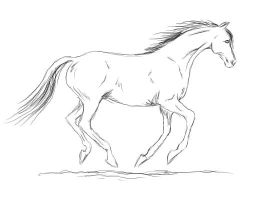 horse canter animation by meramaya89