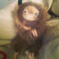 This is Chuck the baby two toed sloth by UglyDoll311
