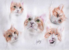 one cat five faces by Georgeina
