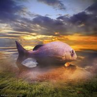Big fish by evenliu