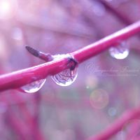 Waterdrops by PetalDreams