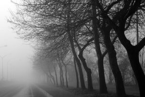 in the fog by alfaowl