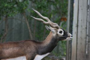 Horns2 by newdystock
