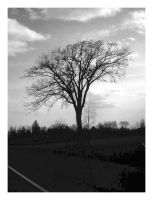 Lone tree stands by katnature