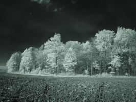 Treescape(IR) by RuralCrossroads360
