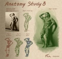 Anatomy study8 by Olekir