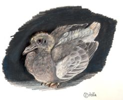 baby pigeon by Reptangle