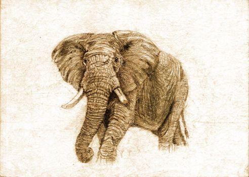 Pencil Sketch of an African Elephant by raghunaut