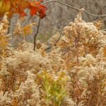 Shades of Autumn 2015, 7A by MadGardens