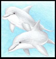 Dolphins by xClub-Cetaceanx