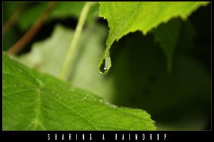 Sharing A Raindrop by XeoPhoto
