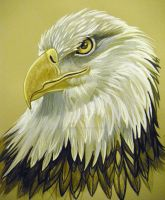 Eagle Eye Watercolor by HouseofChabrier