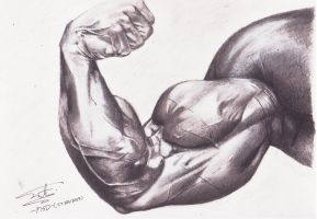 Biceps Muscle Drawing by ShahmiMSD