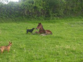 Chocolates 2010 colt by cattlebaron1