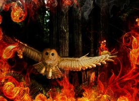 Owl City Burning by Siphen0