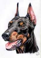 Doberman by GantzAistar
