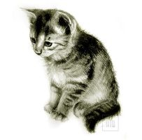 .kitten - sketch. by Lynn003