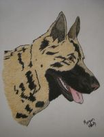 German Shepherd Portrait by morghach