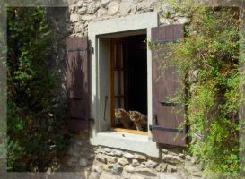 Swiss Cats by pery